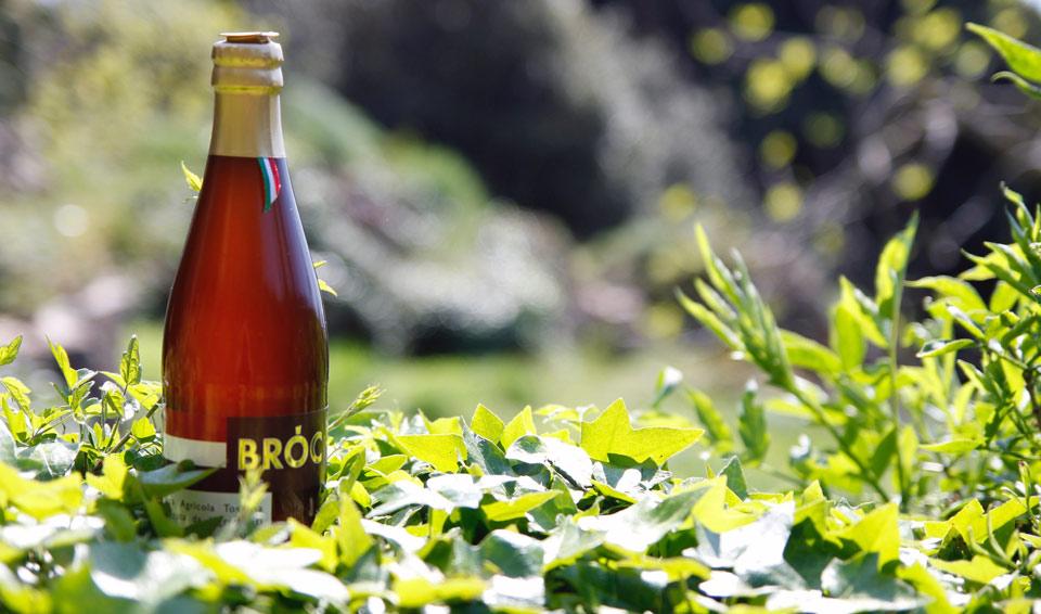 Agricultural Beer BRÓC